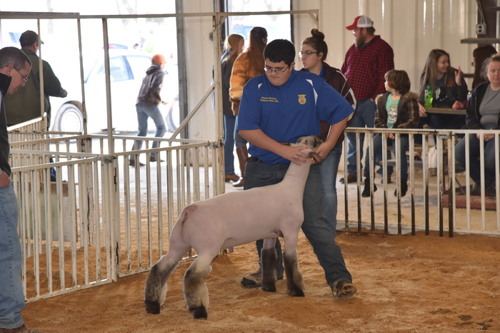 Grand Lamb shown by Hunter Britton